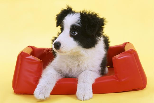中型犬の人気と飼いやすさを独自のランキングTOP5でご紹介!