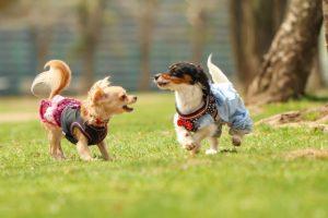 小型犬を人気と飼いやすさを独自のランキングTOP5でご紹介!