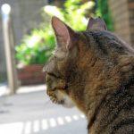 猫を飼う覚悟や魅力、飼育の苦労や介護問題などを体験談でご紹介!