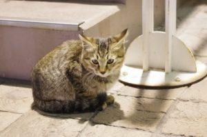野良猫を保護したらどうする?病院か警察?すぐにシャンプーで洗っていいの?