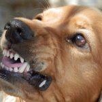 犬が洋服を嫌がる理由は?噛む場合や足を通さないときはどうする?