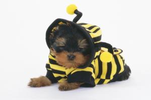 【超簡単】犬の洋服のサイズ直し方法!小さい大きい服リメイク術!