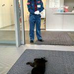【動画】尾道市立美術館の猫と警備員、1カ月ぶりの攻防!かわいい!