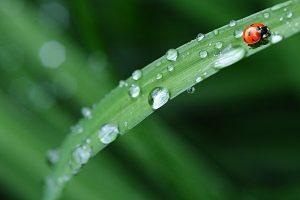 【2019年】関西近畿地方の梅雨入り&明けの時期はいつ頃?平年から予想!