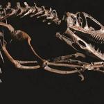 【恐竜博2019】チケット販売場所!見どころと日程時間・アクセスと会場も!