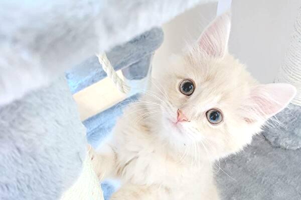さぁや(YouTuber)の猫の種類や名前!報告が病気!病名や症状は?